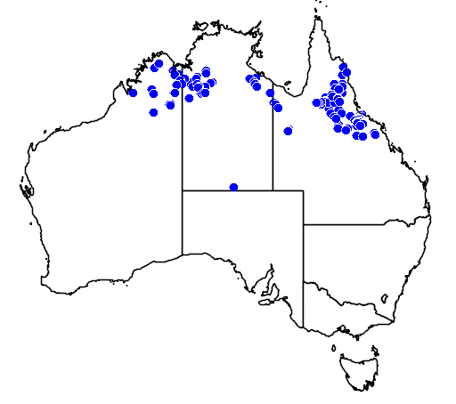 distribution map showing range of Varanus storri in Australia