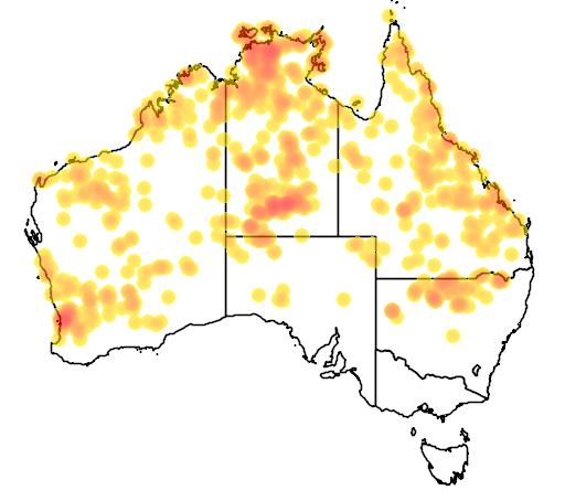 distribution map showing range of Varanus tristis in Australia
