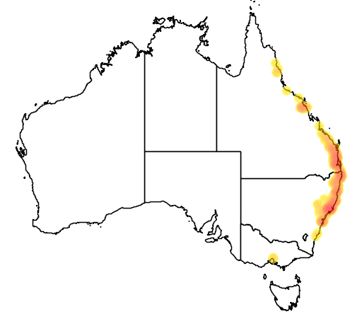 distribution map showing range of Waterhousea floribunda in Australia