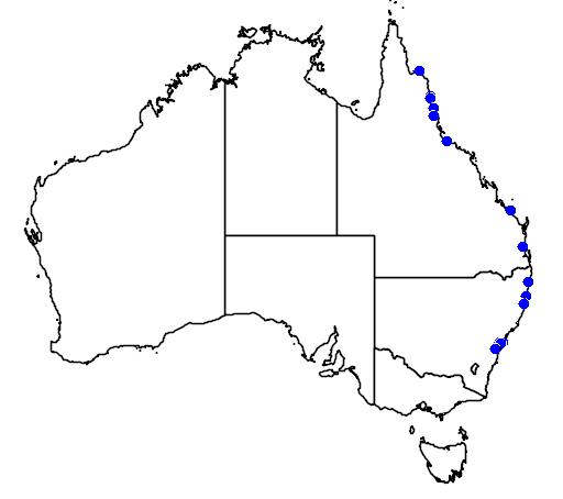 distribution map showing range of Wodyetia bifurcata in Australia