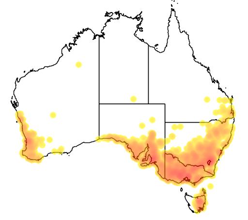 distribution map showing range of Wurmbea dioica in Australia