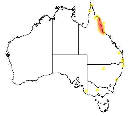 distribution map showing range of Xanthotis macleayana in Australia