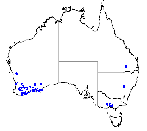 distribution map showing range of Acacia glaucoptera in Australia