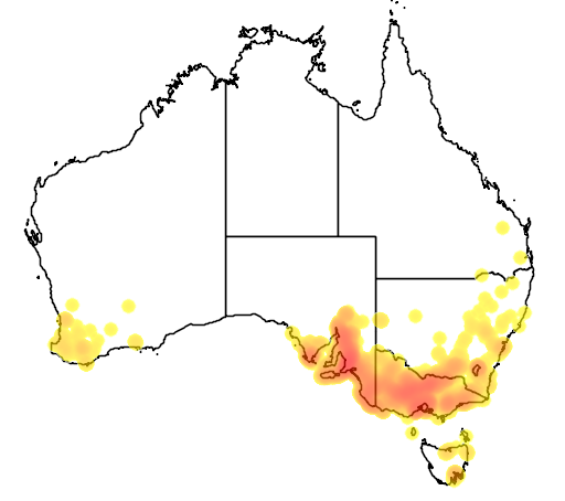 distribution map showing range of Acacia pycnantha in Australia