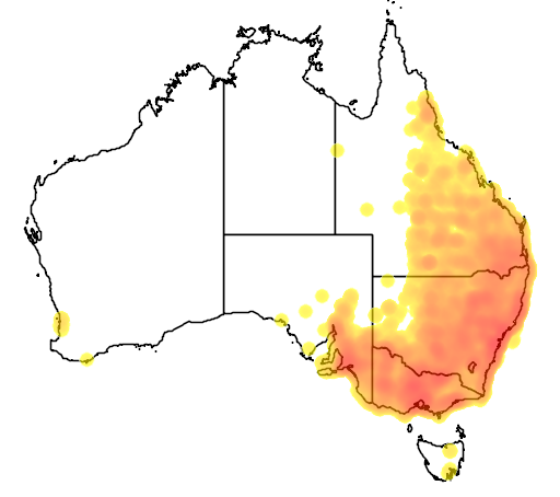 distribution map showing range of Acanthiza nana in Australia