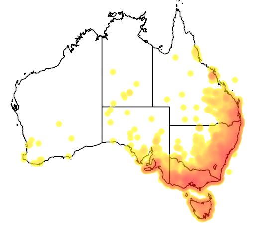 distribution map showing range of Acanthiza pusilla in Australia