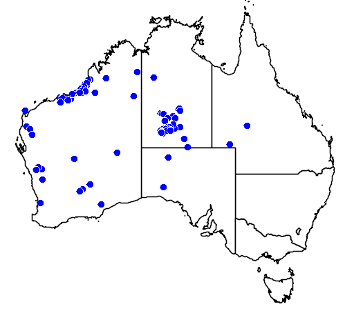 distribution map showing range of Acanthophis pyrrhus in Australia