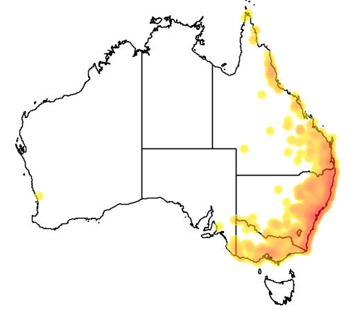distribution map showing range of Acrobates pygmaeus in Australia