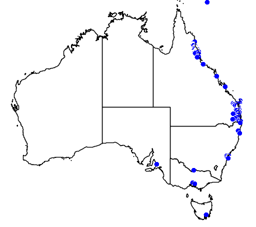 distribution map showing range of Agathis robusta in Australia