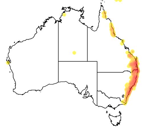 distribution map showing range of Ailuroedus crassirostris in Australia