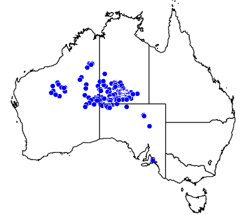 distribution map showing range of Allocasuarina decaisneana in Australia
