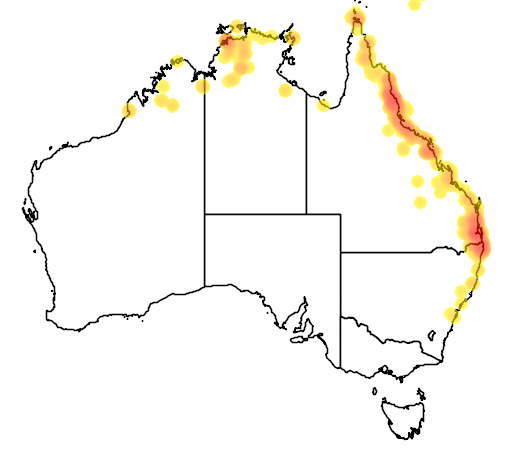 distribution map showing range of Amaurornis moluccana in Australia