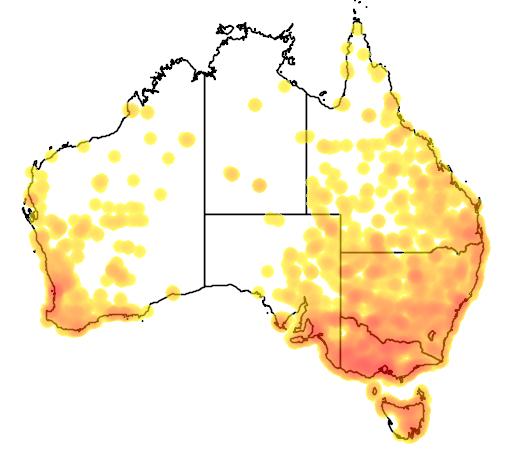 distribution map showing range of Anas rhynchotis in Australia