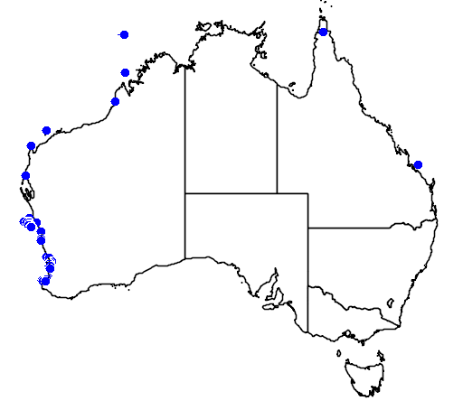 distribution map showing range of Anous tenuirostris in Australia