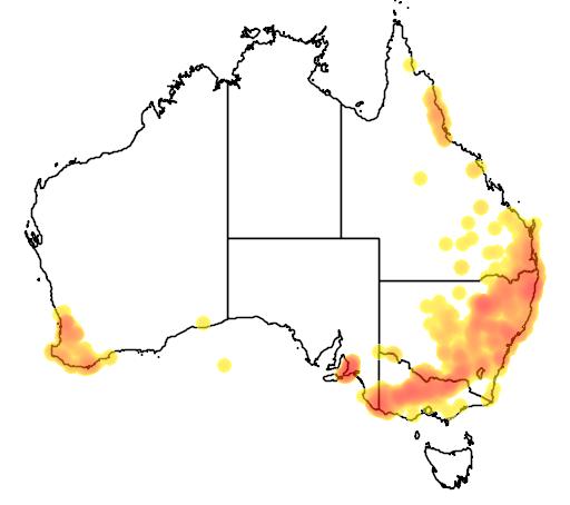 distribution map showing range of Antechinus flavipes in Australia