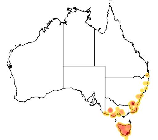 distribution map showing range of Antechinus swainsonii in Australia