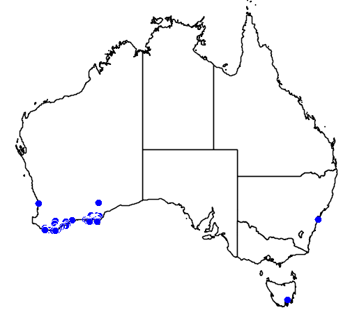 distribution map showing range of Anthocercis viscosa in Australia