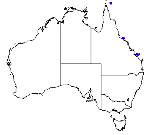 Apogon flavus