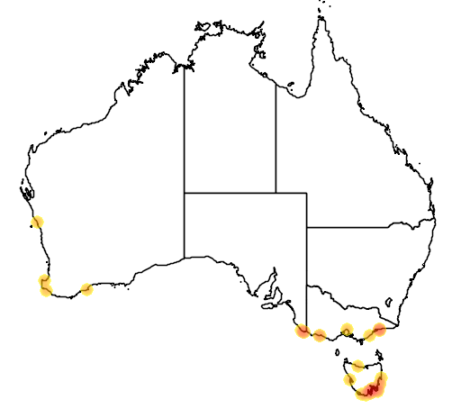 distribution map showing range of Aptenodytes patagonicus in Australia