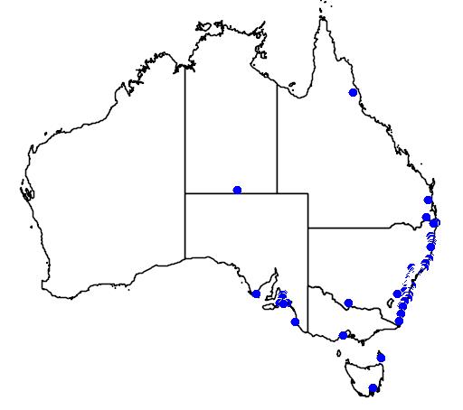 distribution map showing range of Araucaria heterophylla in Australia
