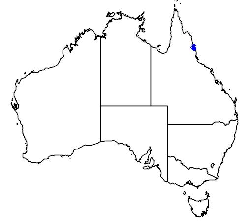 distribution map showing range of Archontophoenix myolensis in Australia