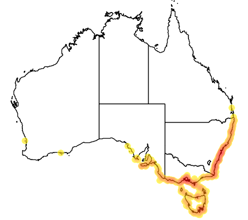distribution map showing range of Arctocephalus pusillus in Australia