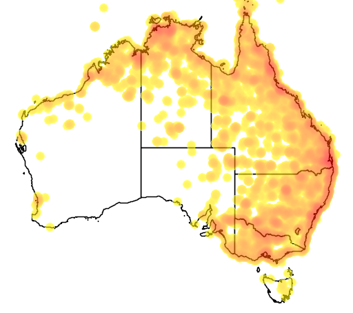 distribution map showing range of Ardea intermedia in Australia