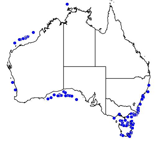 Argentina australiae