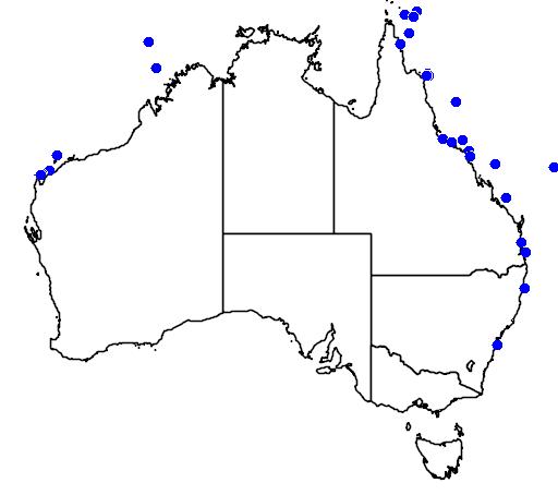 Arothron mappa