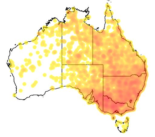 distribution map showing range of Artamus superciliosus in Australia