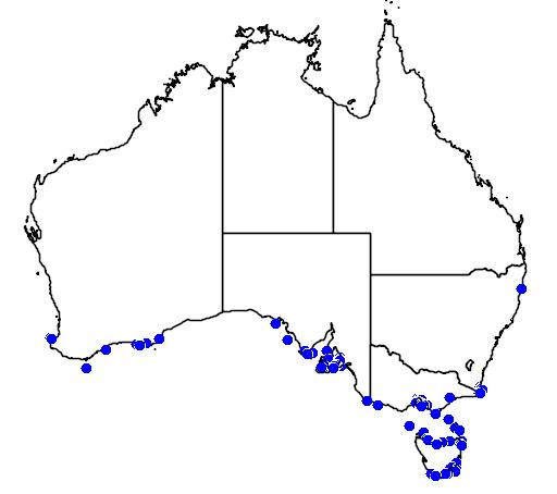 Aspasmogaster tasmaniensis
