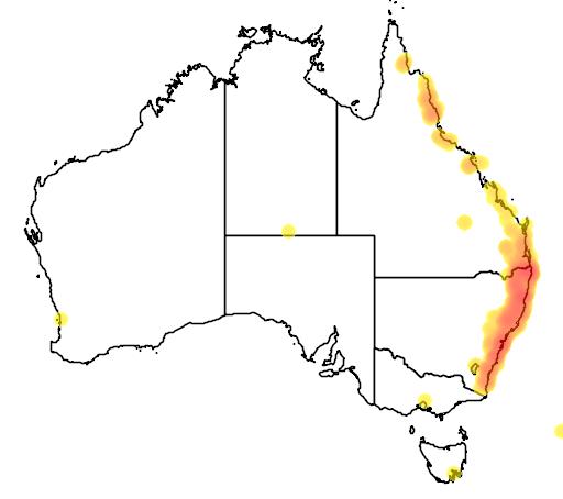 distribution map showing range of Asplenium australasicum in Australia