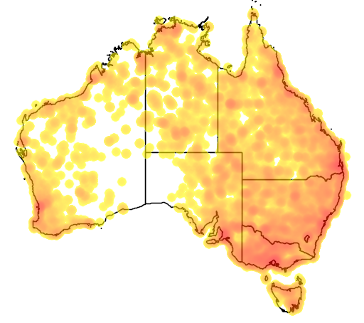 distribution map showing range of Aythya australis in Australia