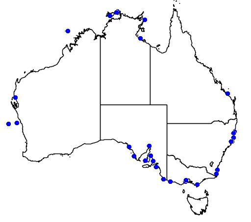 distribution map showing range of Balaenoptera edeni in Australia