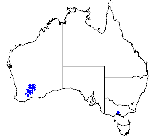 distribution map showing range of Banksia audax in Australia