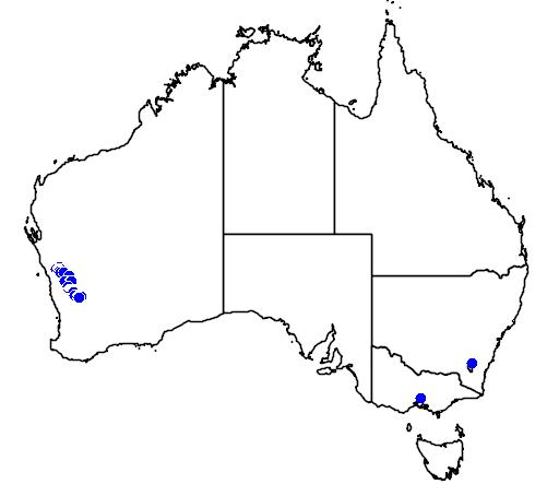 distribution map showing range of Banksia benthamiana in Australia