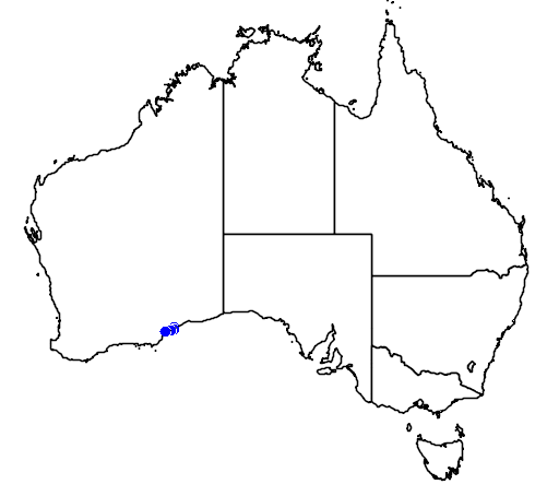 distribution map showing range of Banksia epica in Australia