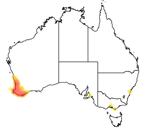 distribution map showing range of Banksia grandis in Australia