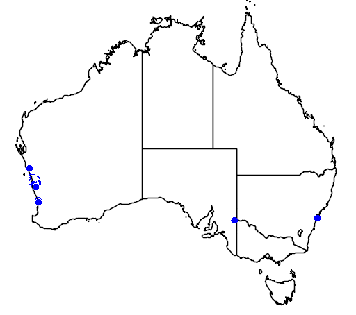 distribution map showing range of Banksia hookeriana in Australia