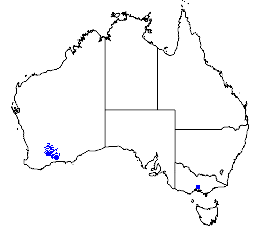distribution map showing range of Banksia laevigata in Australia