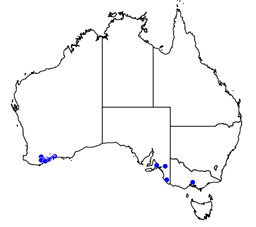 distribution map showing range of Banksia lemanniana in Australia