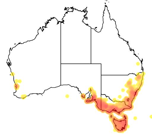 distribution map showing range of Banksia marginata in Australia