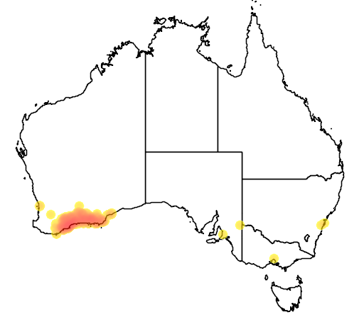 distribution map showing range of Banksia media in Australia