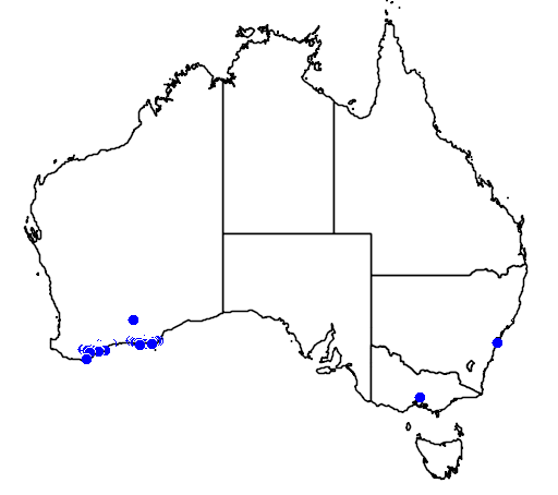 distribution map showing range of Banksia nutans in Australia