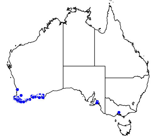 distribution map showing range of Banksia occidentalis in Australia
