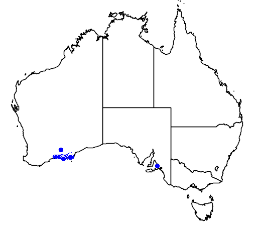 distribution map showing range of Banksia petiolaris in Australia