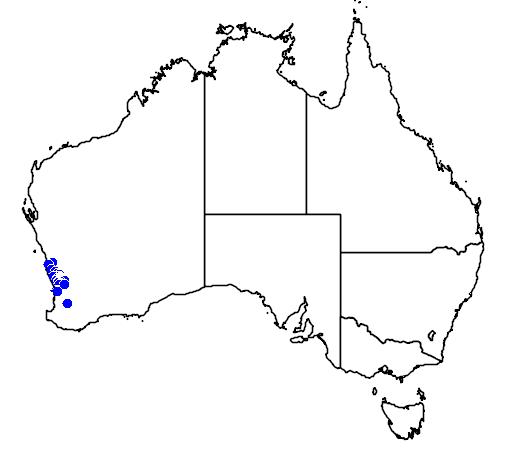 distribution map showing range of Banksia polycephala in Australia