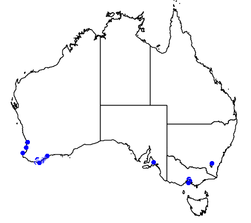 distribution map showing range of Banksia praemorsa in Australia