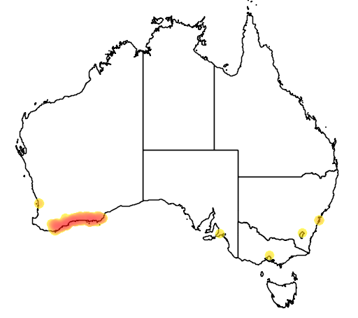 distribution map showing range of Banksia repens in Australia