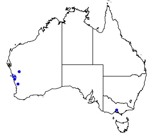 distribution map showing range of Banksia scabrella in Australia